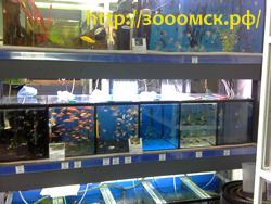 где купить рыбок омск