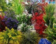 Большое поступление пластиковых растений